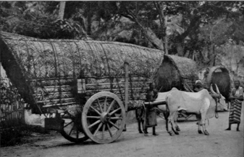 Covered bullock cart
